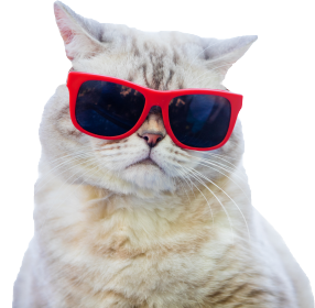 AlfaPet Cool Cat