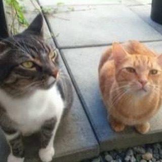 Mr. Oscar & Mr. P. Cat McIntyre Submission: Monét #alfapetcats
